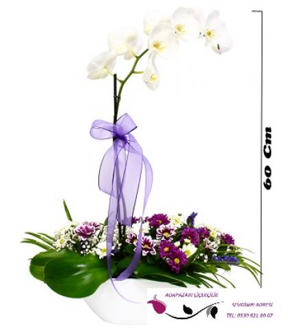 Papatya Aranjmanlı Orkide
