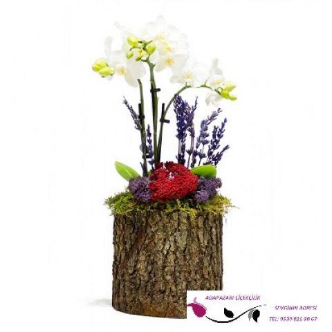 Kütükte Mini Beyaz Orkide